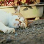 自分にあった睡眠のタイプを知っていますか?睡眠の質を高める3つの方法