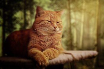 cat-1728026_640